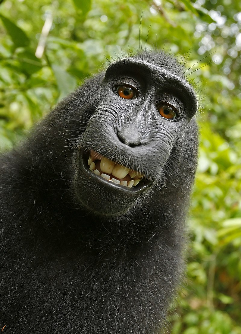 En selfie av en grinande makakapa.