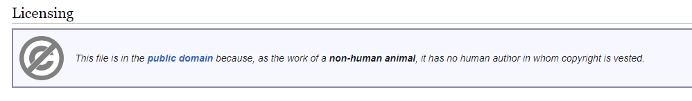Licenstext från Wikimedia commons: This file is in the public domain because, as the work of anon-human animal, it has no human authorin whom copyright is vested.